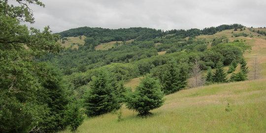 rsz_nc_oak_woodland